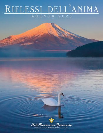 IR20_I_Cover_4851_J5813.indd