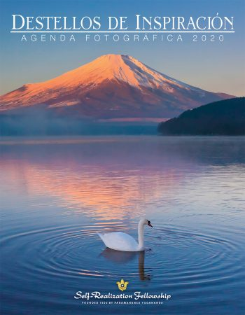 IR20_S_Cover_4852_J5811.indd